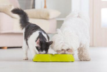 Een hond en een kat eten uit een voederbak met duurzame diervoeding