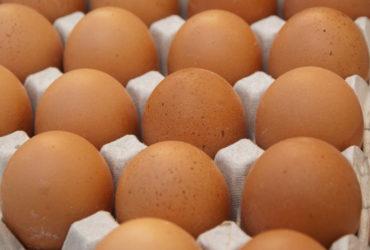 Eieren liggen op een rij in een kartonnen eierdoos